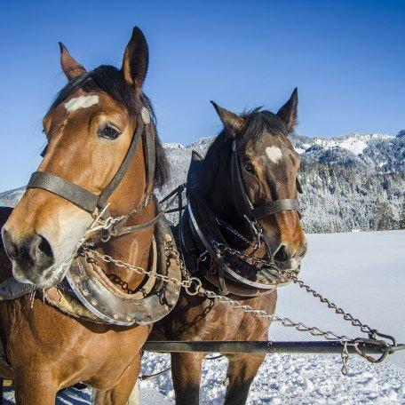 Pferdeschlittenfahrten Bayrischzell, © Florian Liebenstein