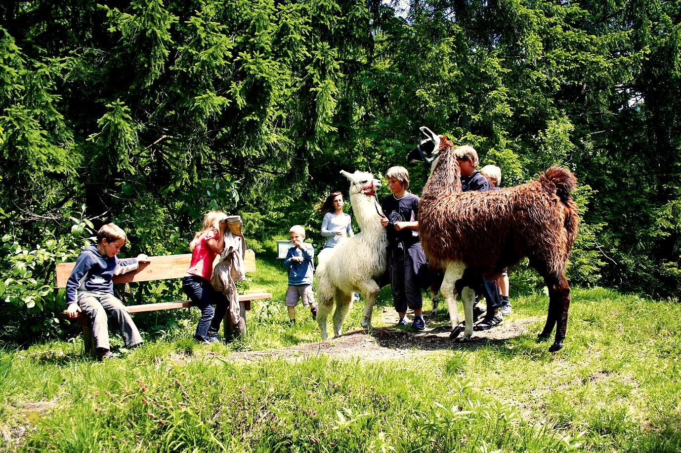 Lamawanderung Bayrischzell, © Tourist-Info Bayrischzell
